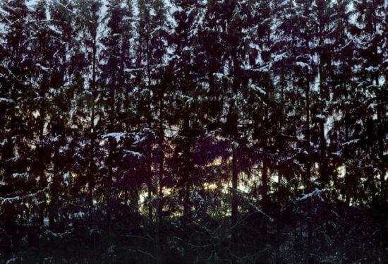 les noční fotografie foto obraz do interiéru